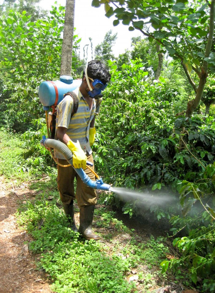 Coffee farmer in India wearing protective equipment while spraying pesticides in the field.