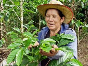Coffee farmer Honduras