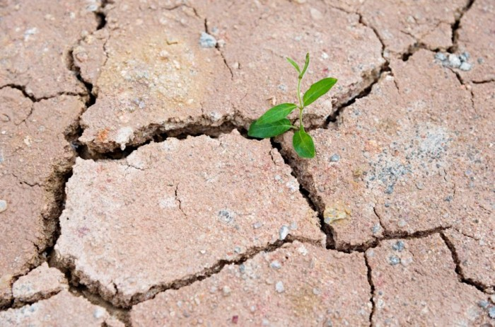 Cracked land with plant - climate change