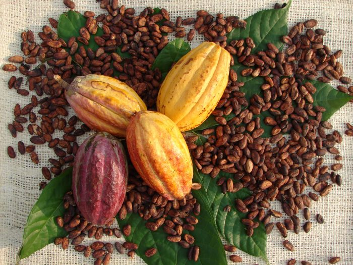 Cocoa pods and beans