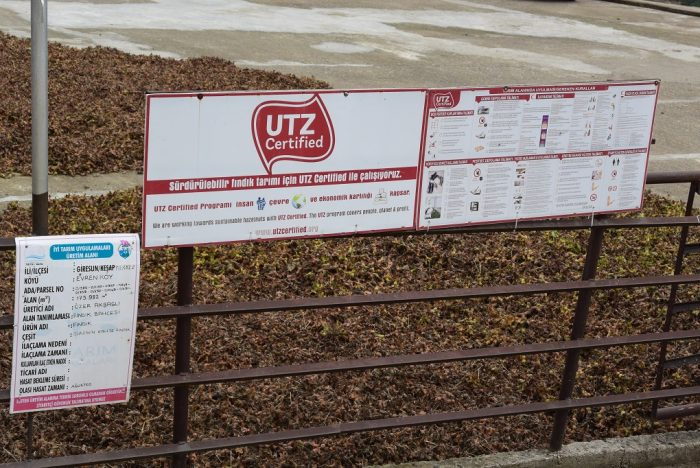 UTZ certified hazelnut farm in Turkey